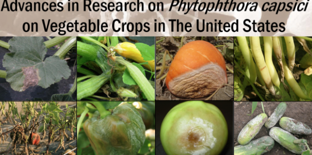 Root, crown and fruit rot, and leaf blight